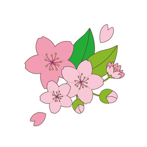 桜の花(季節・行事/その他一般・装飾)のイラスト
