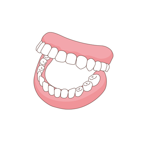 総入れ歯(入れ歯/福祉用具)のイラスト