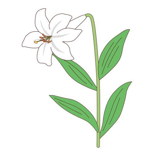 白い百合(お花/その他一般・装飾)のイラスト