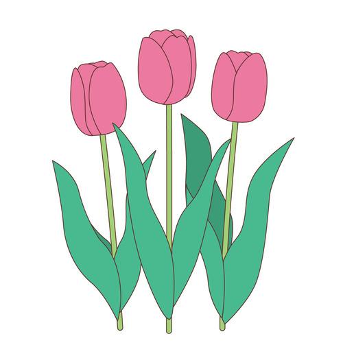 ピンク色のチューリップ(お花/その他一般・装飾)のイラスト
